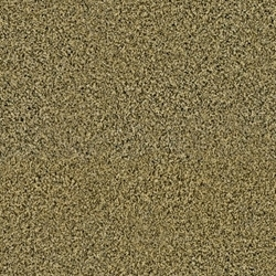 Beyond Style Cut Pile Carpet