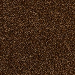 Cozy Plush Carpet Stainmaster Carpet