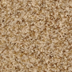 Bombay Cut Pile Carpet by Dixie Home